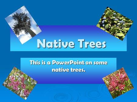 Native Trees Native Trees This is a PowerPoint on some native trees.