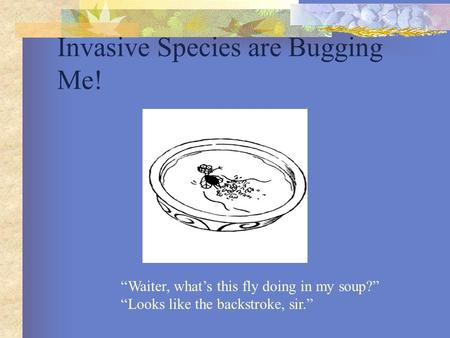 "Invasive Species are Bugging Me! ""Waiter, what's this fly doing in my soup?"" ""Looks like the backstroke, sir."""