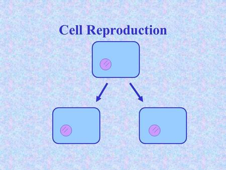Cell Reproduction. Chromosome Structure  _DNA_ is a long, thin molecule that stores the information needed to direct the activities of cells.  Genes.