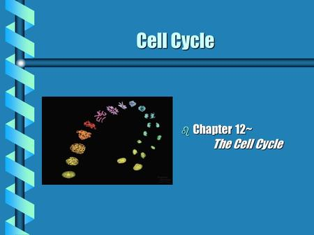 Cell Cycle b Chapter 12~ The Cell Cycle. Cell Division: Key Roles b Genome: cell's genetic information b Somatic (body cells) cells b Gametes (reproductive.