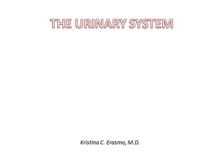 Kristina C. Erasmo, M.D.. URINARY SYSTEM Kidneys (paired) Ureters (paired) Urinary bladder Urethra.