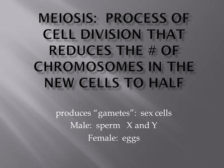 "Produces ""gametes"": sex cells Male: sperm X and Y Female: eggs."