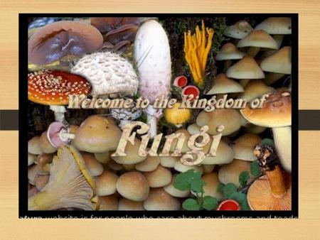 FUNGI. COMMON FUNGI EXAMPLES: Mushrooms, yeasts, molds, morels, bracket fungi, puff balls.