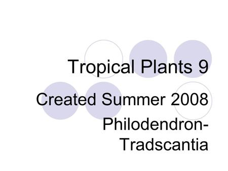 Tropical Plants 9 Created Summer 2008 Philodendron- Tradscantia.