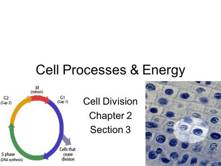 Cell Processes & Energy