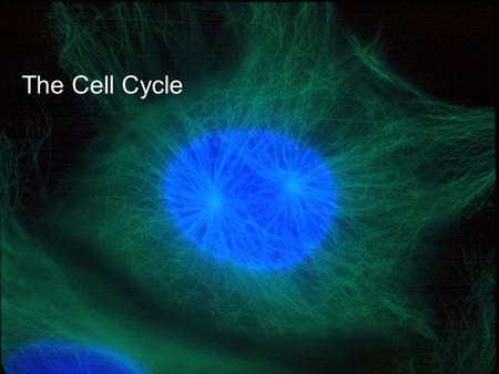 Copyright © 2005 Pearson Education, Inc. publishing as Benjamin Cummings The Cell Cycle.