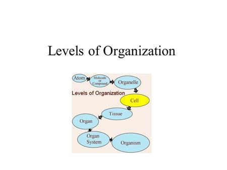 Levels of Organization. Unicellular Organisms Single cell performs all life functions. It functions independently.