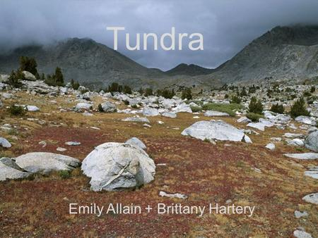 Tundra Emily Allain + Brittany Hartery. Location The tundra is the region in the farther northern hemisphere, most of it's area being in Canada and Russia.