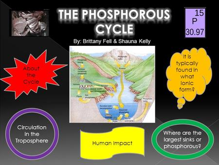 About the Cycle It is typically found in what ionic form? Human Impact Circulation in the Troposphere Where are the largest sinks or phosphorous? By: Brittany.