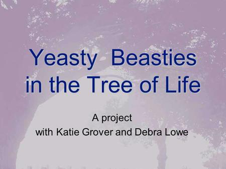 Yeasty Beasties in the Tree of Life A project with Katie Grover and Debra Lowe.