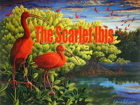 The Scarlet Ibis Background –Author –Publication –Influence James Hurst published in the July 1960 The Scarlet Ibis was the first and only work of Hurst's.