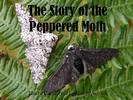 The Story of the Peppered Moth Laura Candler: Hands-On Science.