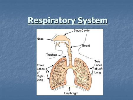 Respiratory System. Main Gases of the Atmosphere Gas Symbol Approximate % Gas Symbol Approximate % Nitrogen N2 78.6 Oxygen O2 20.9 Carbon Dioxide CO2.
