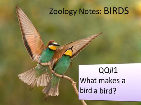 Zoology Notes: BIRDS. What is a bird? Basic Definition: – warm blooded vertebrates – feathers – two legs for walking/perching – front limbs modified into.