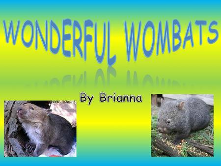 Wonderful wombats By Brianna.