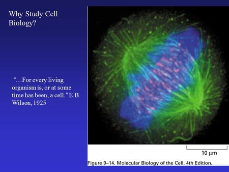 """…For every living organism is, or at some time has been, a cell."" E.B. Wilson, 1925 Why Study Cell Biology?"