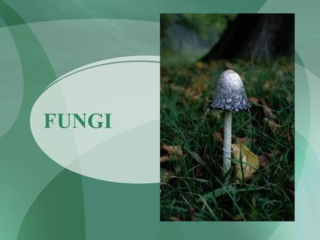 FUNGI. What are Fungi? Eukaryotic heterotrophs Cell walls made of chitin Chitin: found in external skeletons of insects Mostly multicellular.