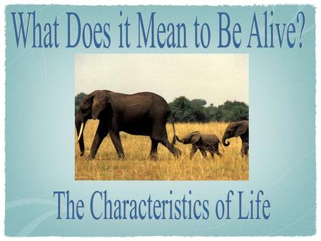 What are the Characteristics of Living Things? Pg. 16 Composed of one or more cells Reproduction Universal Genetic Code Growth & development Energy use.