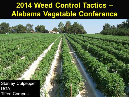 2014 Weed Control Tactics – Alabama Vegetable Conference Stanley Culpepper UGA Tifton Campus.