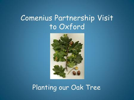 Comenius Partnership Visit to Oxford Planting our Oak Tree.