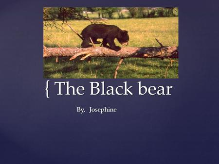 { The Black bear JosephineBy,.  The black bear is a mammal.  Some characteristics of the black bear is that they are black, and they come in all sizes.
