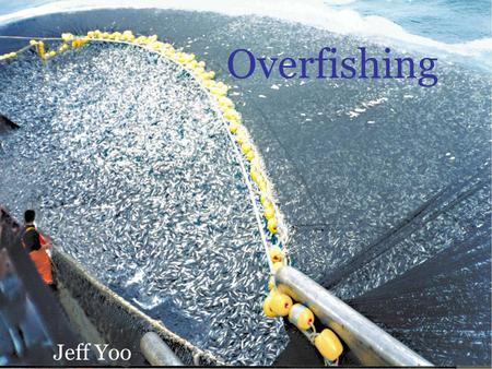 Overfishing Jeff Yoo. What is Overfishing? Overfishing can be defined in many way but it all comes down to one simple point: Catching too much fish. Fishing.