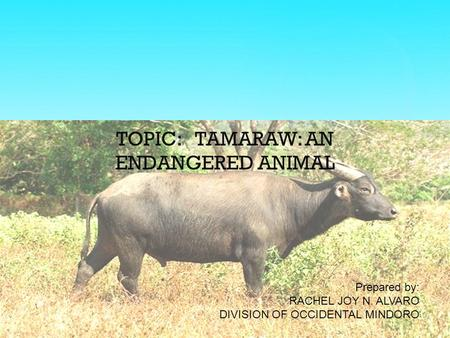 TOPIC: TAMARAW: AN ENDANGERED ANIMAL Prepared by: RACHEL JOY N. ALVARO DIVISION OF OCCIDENTAL MINDORO.