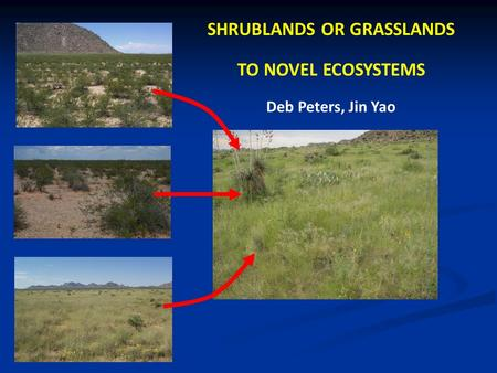 SHRUBLANDS OR GRASSLANDS TO NOVEL ECOSYSTEMS Deb Peters, Jin Yao.