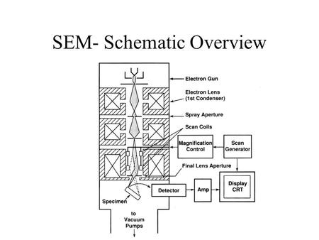 SEM- Schematic Overview. Electron Detection Tungsten Filament Electron Source.