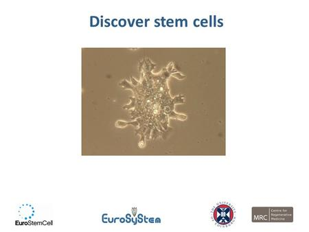 Discover stem cells. By the end of this lesson, you should…  Know what a stem cell is  Know about different types of stem cells and where they are 