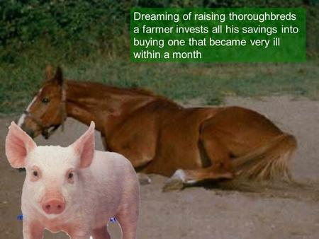 Dreaming of raising thoroughbreds a farmer invests all his savings into buying one that became very ill within a month.
