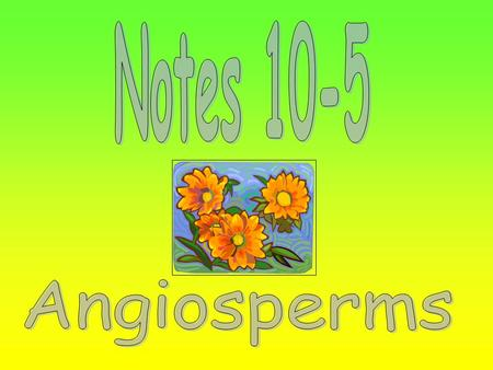 1.) Gymnosperms 2.) Angiosperms The flower helps the plant to reproduce.