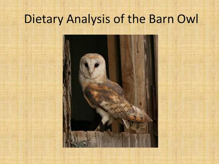 Dietary Analysis of the Barn Owl