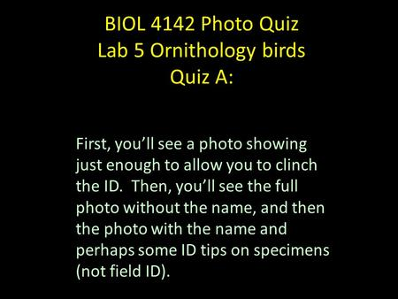 BIOL 4142 Photo Quiz Lab 5 Ornithology birds Quiz A: First, you'll see a photo showing just enough to allow you to clinch the ID. Then, you'll see the.