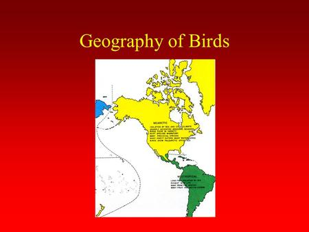 Geography of Birds. Palearctic Region Largest region Site of origin of all birds Great diversity of habitats Poor bird variety (cold climate, sharply.