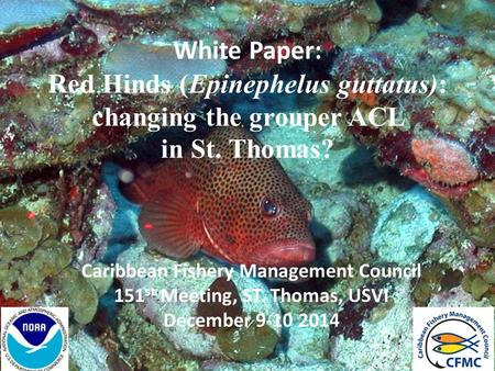 White Paper: Red Hinds (Epinephelus guttatus): changing the grouper ACL in St. Thomas? Caribbean Fishery Management Council 151 st Meeting, ST. Thomas,