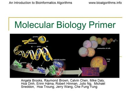 Www.bioalgorithms.infoAn Introduction to Bioinformatics Algorithms Molecular Biology Primer Angela Brooks, Raymond Brown, Calvin Chen, Mike Daly, Hoa Dinh,