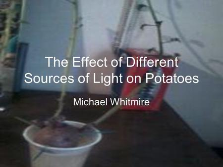 The Effect of Different Sources of Light on Potatoes Michael Whitmire.