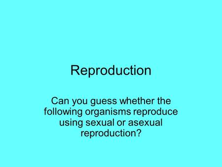 Reproduction Can you guess whether the following organisms reproduce using sexual or asexual reproduction?