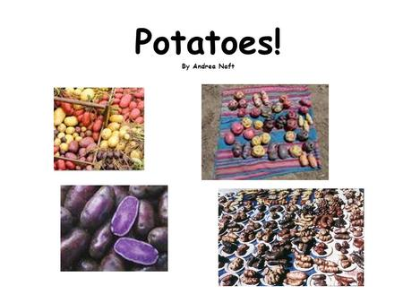 Potatoes! By Andrea Naft. Eating would be boring if we didn't have the wonderful foods introduced to the world by the Natives of North and South America.
