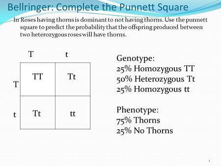 Bellringer: Complete the Punnett Square In Roses having thorns is dominant to not having thorns. Use the punnett square to predict the probability that.