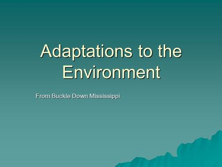Adaptations to the Environment
