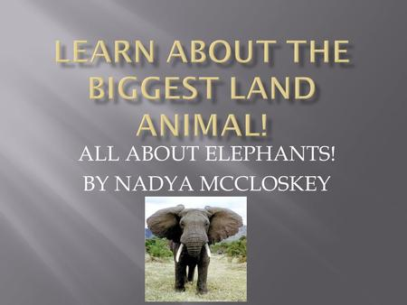 ALL ABOUT ELEPHANTS! BY NADYA MCCLOSKEY. Introduction My name is Nadya, I chose the elephant because I think they are interesting.