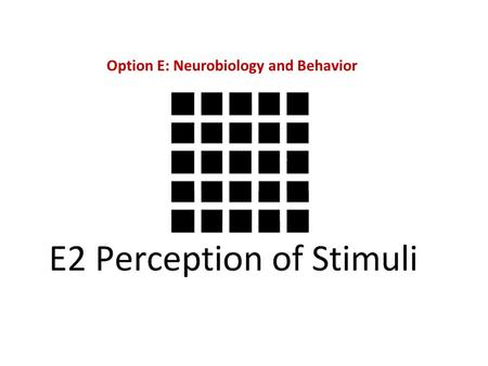 Option E: Neurobiology and Behavior. E.2.1 Outline the diversity of stimuli that can be detected by human sensory receptors, including mechanoreceptors,