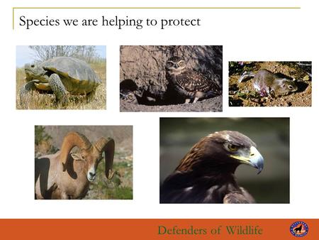 Defenders of Wildlife Species we are helping to protect.