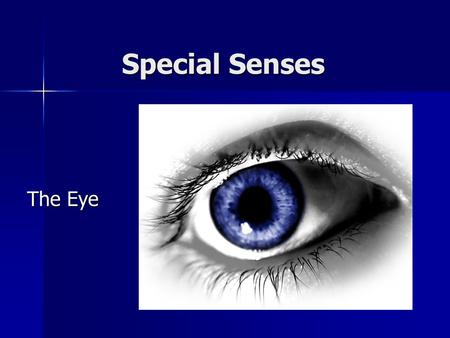 Special Senses The Eye.