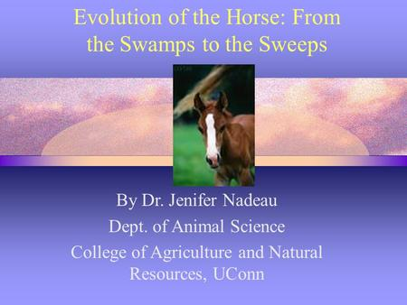 Evolution of the Horse: From the Swamps to the Sweeps By Dr. Jenifer Nadeau Dept. of Animal Science College of Agriculture and Natural Resources, UConn.