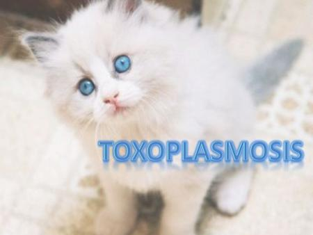  Toxoplasmosis is a zoonotic disease caused by infection with the protozoan Toxoplasma gondii  Toxoplasmosis may cause flu- like symptoms in some people,