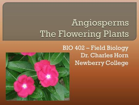 BIO 402 – Field Biology Dr. Charles Horn Newberry College.