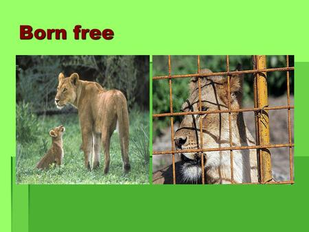 Born free. Wild animals alligator camel penguins giraffe black bear monkey.